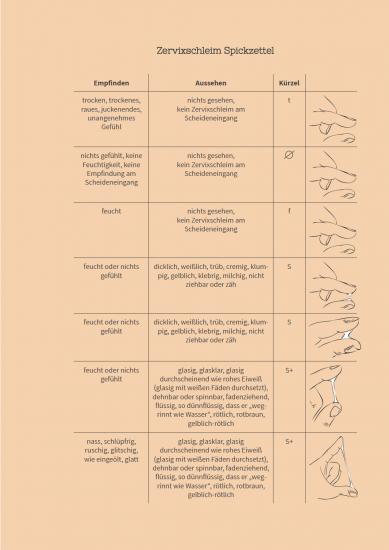 Zyklus Planer Zervixschleim